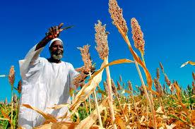 Seeds Tanzania